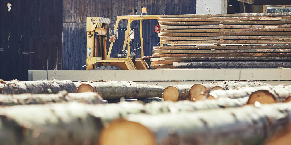 photo of Alberta's forestry industry workplace